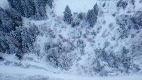 Metragem aérea da floresta da árvore de abeto do inverno nas montanhas Vista de cima dos pinheiros cobertos com a neve Quadcopter filme