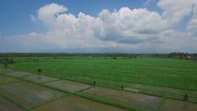 Metragem aérea de campos do arroz em Ásia filme