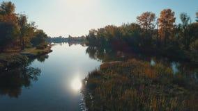 Metragem aérea do zangão Voo sobre o rio calmo entre a floresta video estoque