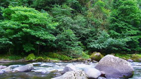 Metragem de Geórgia do parque do mtirala da natureza do verão da montanha do rio da montanha vídeos de arquivo