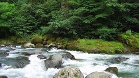 Metragem de Geórgia do parque do mtirala da natureza do verão da montanha do rio da montanha video estoque