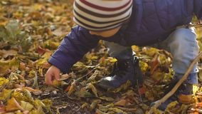A metragem do movimento lento do bebê pequeno bonito encontrou algo no parque do outono vídeos de arquivo