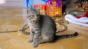 Metragem do movimento lento do gatinho pequeno bonito que senta-se sob a árvore de Natal na sala de visitas filme