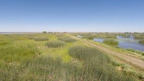 Metragem do zangão sobre o campo de grama da água e a estrada de terra Califórnia filme