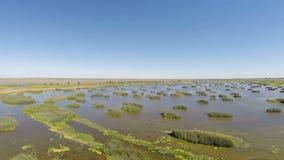 Metragem do zangão sobre pantanais Califórnia da água e da grama video estoque
