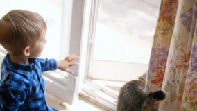 a metragem 4k do rapaz pequeno abre a porta na rua para o gato doméstico video estoque