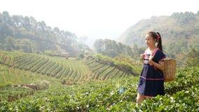 metragem 4k Mulher asiática tribal nova com a cesta da caminhada de Tailândia que passa a plantação do campo da morango na manhã video estoque