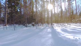 Metraggio aereo Altezza di volo bassa Paesaggio di inverno Giorno pieno di sole Foresta congelata video d archivio