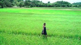 metraggio aereo del fuco 4K della ragazza bionda in vestito blu che cammina lungo le risaie in EL Nido, Filippine stock footage