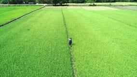metraggio aereo del fuco 4K della ragazza bionda in vestito blu che cammina lungo le risaie in EL Nido, Filippine archivi video