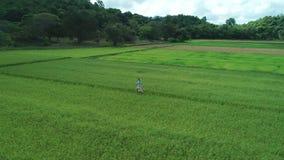 metraggio aereo del fuco 4K della ragazza bionda in vestito che cammina lungo le risaie in EL Nido, Filippine stock footage