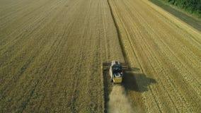 Metraggio aereo del fuco A seguito della mietitrebbiatrice riunisce il grano Raccolta del campo di grano Bella antenna naturale archivi video