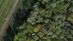 Metraggio aereo del volo sopra la frontiera della foresta dell'Europa centrale della pianura stock footage