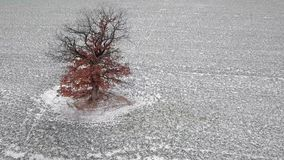 Metraggio aereo di orbita dell'albero di inverno stock footage