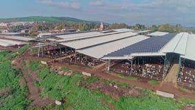 Metraggio aereo di un'azienda lattiera della larga scala con molte mucche sotto i tetti stock footage