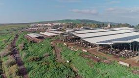 Metraggio aereo di un'azienda lattiera della larga scala con molte mucche sotto i tetti archivi video