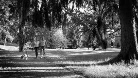 Metraggio in bianco e nero: Giovani coppie sulla passeggiata con il loro cane da lepre dell'animale domestico video d archivio