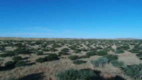 Metraggio del fuco della Kalahari archivi video