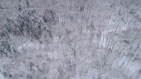 Metraggio del fuco Paesaggio di inverno nella foresta stock footage