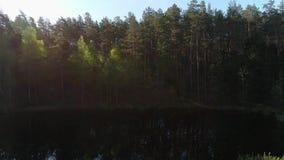 Metraggio del fuco del volo del piccolo lago attraverso gli alberi in foresta stock footage