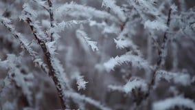 Metraggio del hd dell'albero congelato foresta di inverno stock footage