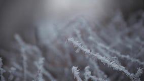 Metraggio del hd dell'albero congelato foresta di inverno archivi video