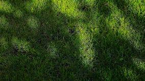 Metraggio del hd dell'ombra dell'albero di erba verde nessuno stock footage