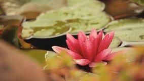 Metraggio del hd della goccia di pioggia del lago water lily nessuno archivi video