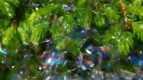 Metraggio del hd del fondo delle bolle di sapone dell'albero di abete stock footage