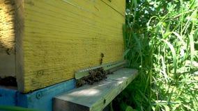 Metraggio del rallentatore di FullHD Abbondanza delle api all'entrata dell'alveare in arnia archivi video