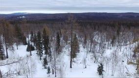 Metraggio dell'antenna della foresta di inverno video d archivio