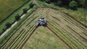 Metraggio nell'azienda agricola del riso sulla raccolta della stagione dall'agricoltore con le mietitrebbiatrici