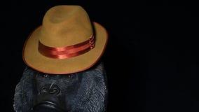 Metraggio scuro del hd del fondo del cappello d'annata capo della gorilla video d archivio