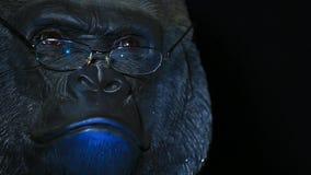 Metraggio scuro del hd del fondo di vetro capi della gorilla archivi video
