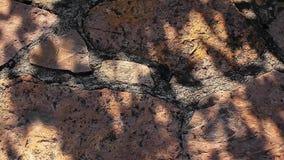 Metraggio tagliente del hd dell'ombra dell'albero della parete di pietra nessuno archivi video