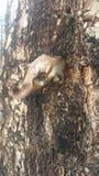 Metralha da árvore Imagens de Stock