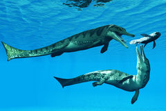 Metriorhynchus Aquatic Reptiles Stock Photos