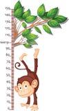 Metro per misurare crescita con una scimmia Fotografia Stock