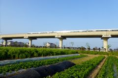 A metro track through a field. A moving metro on a bridge through a vegetables field in pudong area of shanghai china royalty free stock image