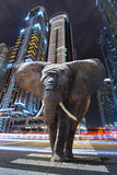 A metropolitan jungle. With elephant walking on the road Royalty Free Stock Photos