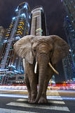A metropolitan jungle. With elephant walking on the road Stock Photo