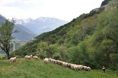 Metsovo region Northern  Greece Royalty Free Stock Image
