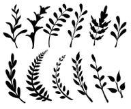 Metta con gli elementi e le foglie floreali Elementi decorativi per il vostro disegno Foglie, turbinii, illustrat piano floreale  illustrazione vettoriale