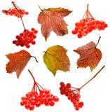 Metta con le bacche di autunno Fotografia Stock