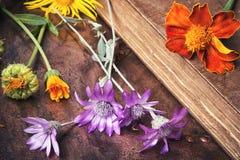 Metta con le erbe sane Fotografia Stock