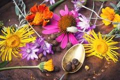 Metta con le erbe sane Fotografia Stock Libera da Diritti