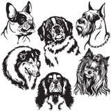 Metta con le teste di cani Fotografie Stock Libere da Diritti