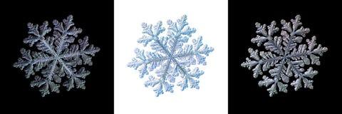 Metta con tre varianti del fiocco di neve, isolate sugli ambiti di provenienza in bianco e nero Immagine Stock