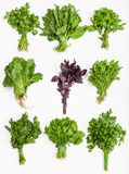 Metta dai mazzi di erbe fresche di verde del taglio Fotografia Stock Libera da Diritti