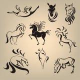 Metta dalla raccolta dei cavalli Immagini Stock